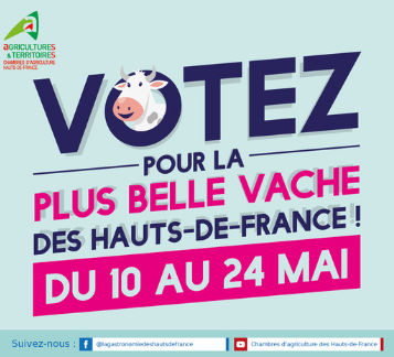 Votez pour votre la plus belle vache des Hauts-de-France